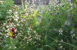 Flowers.slideshow