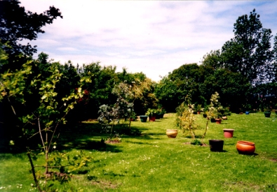 looking up the garden preparing to plant